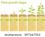 plants growing infographic.... | Shutterstock .eps vector #397267552
