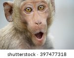 Stock photo funny monkeys a funny monkey lives in a natural forest of thailand 397477318