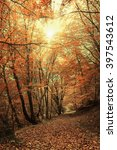 autumn forest. forest trail in... | Shutterstock . vector #397543612
