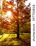 urban park in fall with trees... | Shutterstock . vector #397703818