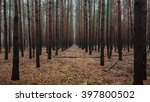 Spooky Dark Forest With...