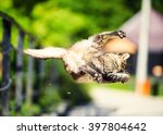 Stock photo cat hunted a sparrow in the air jump 397804642