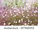 Wild Flowers With Abstract...