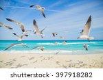 Birds On The Beach. Seagulls