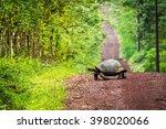 Galapagos Giant Tortoise...