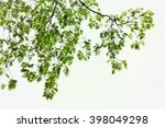 green leaves and branches on... | Shutterstock . vector #398049298