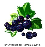 black currant | Shutterstock .eps vector #398161246