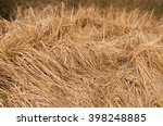 Dry Sedge And Cattails Autumn...