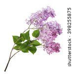 light lilac flowers isolated on ... | Shutterstock . vector #398255875