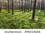 Forest Covered With Moss