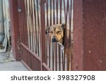 Dog looking peacefully thrusting its head into the gates.