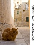 A Cat Waiting Sleepy In A...