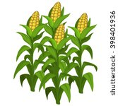 growth and ripening corn.... | Shutterstock .eps vector #398401936
