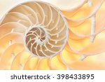 nautilus shell section  perfect ... | Shutterstock . vector #398433895