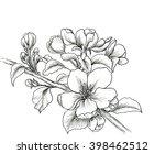 hand drawn branch of cherry... | Shutterstock . vector #398462512