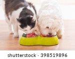 little dog maltese and black... | Shutterstock . vector #398519896