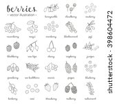 hand drawn outline berries... | Shutterstock .eps vector #398604472