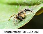 jumping spider | Shutterstock . vector #398615602