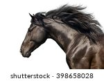 Stock photo black stallion with long mane in motion portrait isolated on white background 398658028