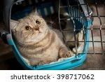 cat inside pet carrier.   Shutterstock . vector #398717062