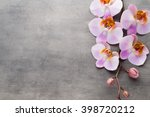 orchid theme objects on the... | Shutterstock . vector #398720212