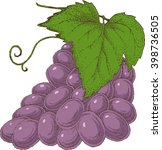 grape branch hand drawn vector... | Shutterstock .eps vector #398736505