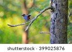 Blue Bird From Srilanka