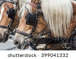 Portrait Of Two Brown Horses I...
