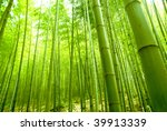 Bamboo Forest  Natural Green...