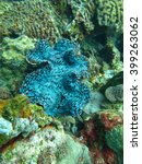 thriving  coral reef alive...   Shutterstock . vector #399263062