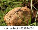 small reptile | Shutterstock . vector #399346855