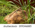 little friend | Shutterstock . vector #399346885
