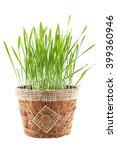 green grass in brown pot...   Shutterstock . vector #399360946