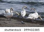 italy  lazio  bracciano lake ...   Shutterstock . vector #399432385