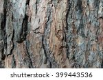 Texture Of Pine Bark. Tree Or...