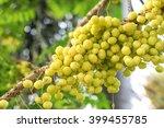 yellow star gooseberry   Shutterstock . vector #399455785
