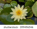 Water Lilly On Water Surface I...