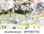 Christian Cemetery With Sakura...