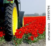 Tractor On The Tulip Field ...