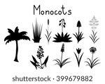 examples of monocots plants... | Shutterstock .eps vector #399679882