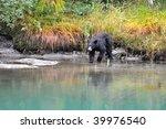 Black Bear At Mendenhall Glacier