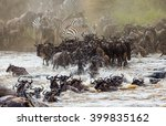 wildebeests are crossing mara...   Shutterstock . vector #399835162