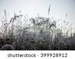 frosty grass in winter in cold... | Shutterstock . vector #399928912
