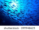 Silhouette Of Fishes
