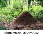 Big Anthill In The Woods. Big...