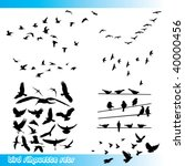 Stock vector birds silhouette sets 40000456