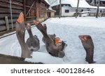 Hungry Geese In Village. Farm...