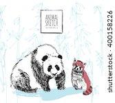 Giant Panda Bear With Bamboo...