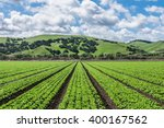 rows of lettuce crops with... | Shutterstock . vector #400167562