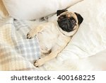 Stock photo pug dog lying in bed under blanket 400168225